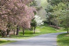 Floraciones del árbol del resorte foto de archivo