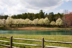 Floraciones del árbol por el lago imágenes de archivo libres de regalías