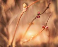 Floraciones del azafrán de la primavera imagenes de archivo