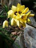 Floraciones del jardín Fotografía de archivo