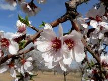 Floraciones del resorte Foto de archivo