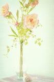 Floraciones del resorte Imágenes de archivo libres de regalías