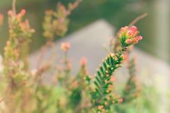 Floraciones del verano Imagen de archivo libre de regalías