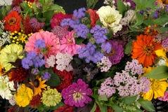 Floraciones del verano Foto de archivo libre de regalías