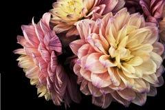 Floraciones en colores pastel Imagen de archivo libre de regalías