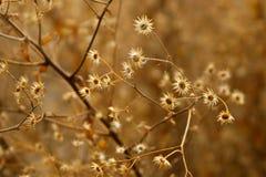 Floraciones en un árbol Imágenes de archivo libres de regalías