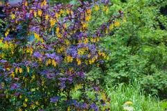 Floraciones hermosas del árbol en primavera Imágenes de archivo libres de regalías