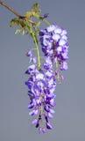 Floraciones largas Foto de archivo