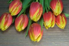 Floraciones rojas del tulipán en fondo de madera Foto de archivo libre de regalías