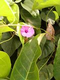 Floraciones rosadas de la flor fotografía de archivo
