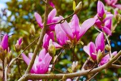 Floraciones vibrantes de la primavera Fotos de archivo