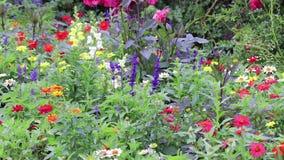 Floraciones y brotes coloridos en jardín del noroeste pacífico almacen de video