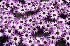 Florafyrverkerier arkivfoton