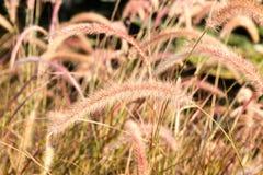 Floragräser, die im Wind durchbrennen Stockfotografie