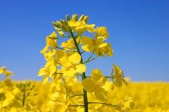 Floraison. Images stock