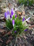 Floraison photo stock