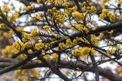 Floraison Photo libre de droits