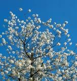 Floraison photos stock