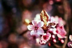 Floraison Photos libres de droits