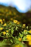 Floraison au printemps des fleurs de forêt Image libre de droits