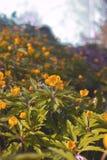 Floraison au printemps des fleurs de forêt Photos stock