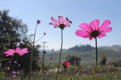 Floraison au soleil Photographie stock libre de droits