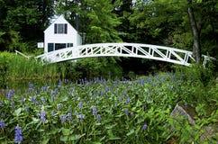 Floraison autour du pont de pied dans l'Acadia Image stock