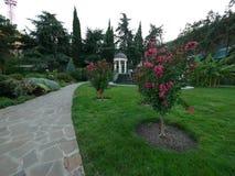 Floraison avec de jeunes arbres de couleur rose sur une pelouse près d'un chemin en pierre en parc parmi les buissons verts et ar photographie stock libre de droits