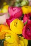 Floraison colorée de fleurs Photo stock