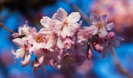 Floraison d'arbre de fleur Image libre de droits