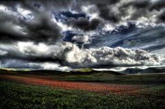 Floraison dans la tempête Image stock