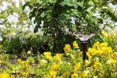 Floraison de arrosage de fleurs Photos stock