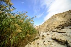Floraison de désert Photos stock