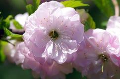 floraison de fleurs Photo stock