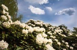 Floraison de fleurs Image libre de droits