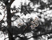 Floraison de fleurs Photographie stock libre de droits