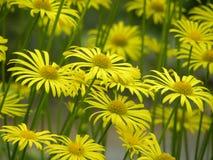 Floraison de fleurs de ressort photos stock