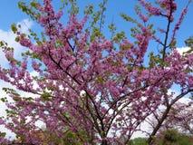 Floraison de fleurs de ressort photographie stock libre de droits