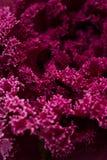 Floraison de fleurs de rose et de purplr Photographie stock libre de droits