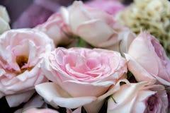 Floraison de fleurs de Rose Images stock