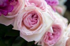 Floraison de fleurs de Rose Photo libre de droits