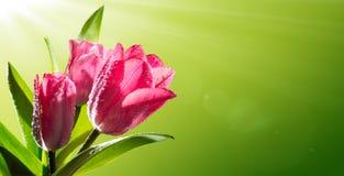 Floraison de l'anniversaire romantique photos libres de droits