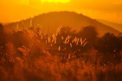 Floraison de l'herbe. Photos libres de droits