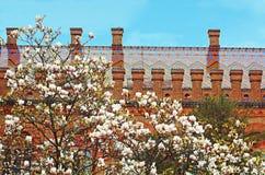 Floraison de magnolia et résidence de Bukovinian et de métropolitaine dalmatienne images libres de droits