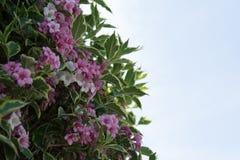 Floraison de ressort Image libre de droits
