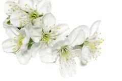 Floraison de source Image stock