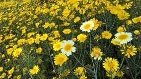 Floraison de wildflowers de ressort Image libre de droits