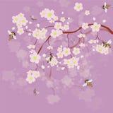 Floraison du cerisier et des abeilles Image stock