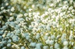 Floraison et bokeh blancs d'usine photos libres de droits