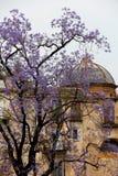 Floraison magnifique d'un arbre, lilas Photos stock